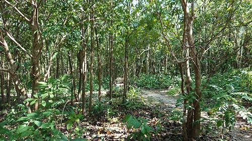 僧院はこのような森の中にありました。