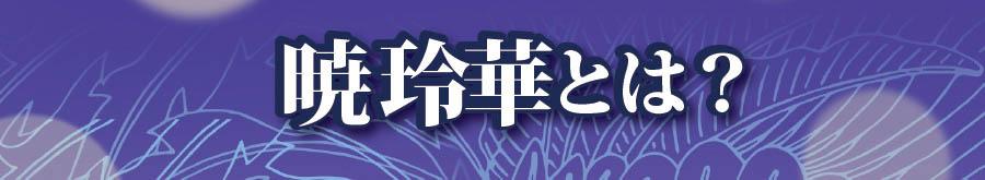 暁-玲華とは?